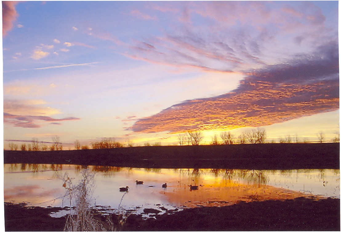 Click image for larger version  Name:Missouri Duck Hunt (18).jpg Views:10 Size:386.1 KB ID:11865
