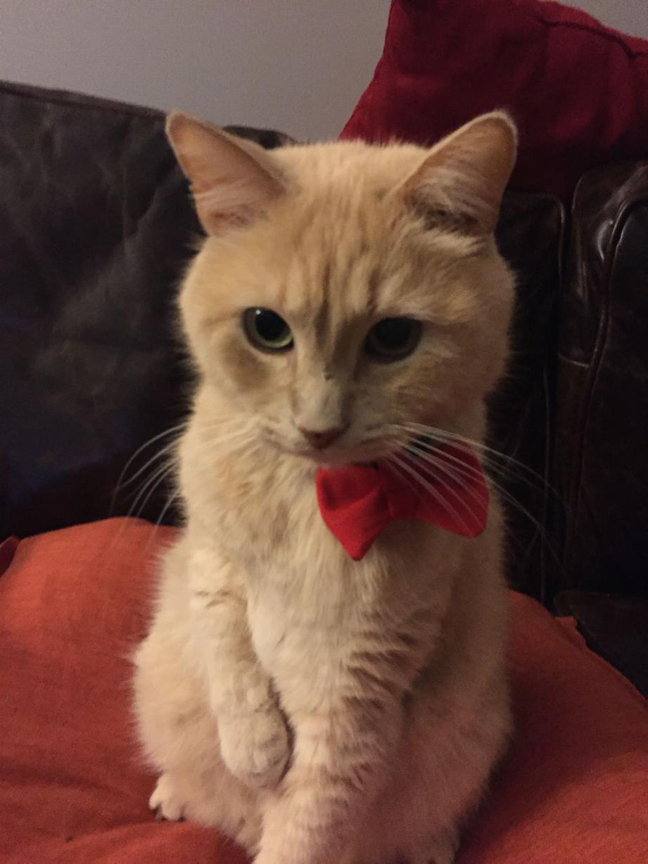 Click image for larger version  Name:red-bow-tie.jpg Views:189 Size:83.2 KB ID:6754