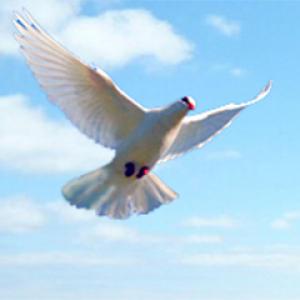 Dove Profile